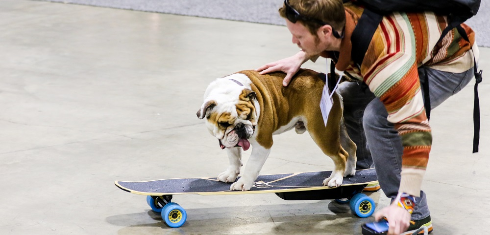 mellow-electric-skateboard-SIA snow show dog ride - banner